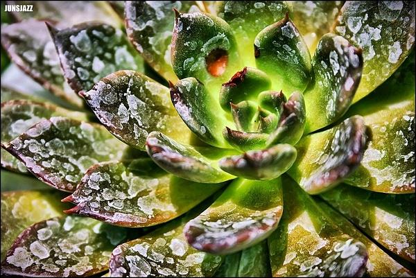Flora  Fauna 18