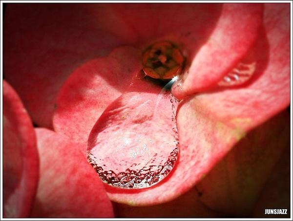 Flora  Fauna 45