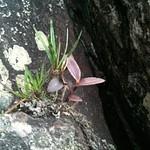 Flora Quintas do Morro