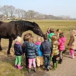 School trip to the Farm