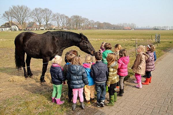 School trip to the Farm by Kate Korochkina