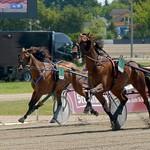 Berlin Harness racing 2015