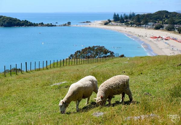 Tauranga New Zealand 2016 by Mariah Nile
