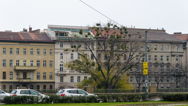 20121111-102256-NIKON_D5100 by Constantine Voronin