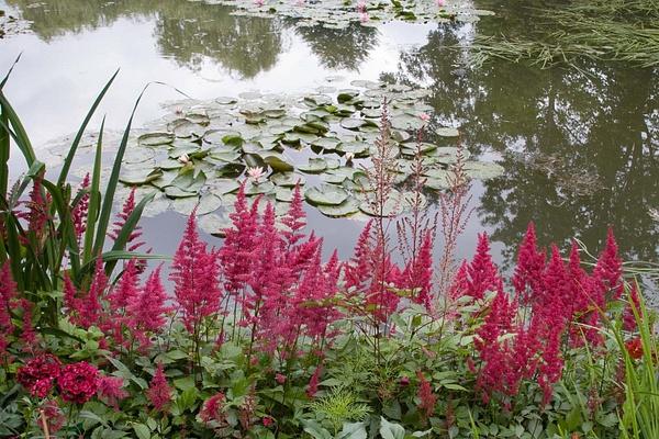 Jardin de Monet, Giverny by MartinBishop