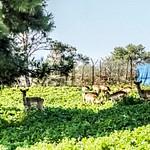 על הכרמל, חי בר ועוספיה -פברואר 2019
