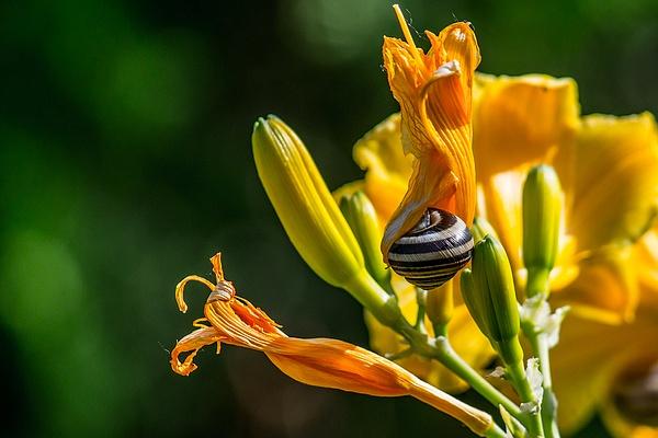 Garden Life by Oleg Kurovsky