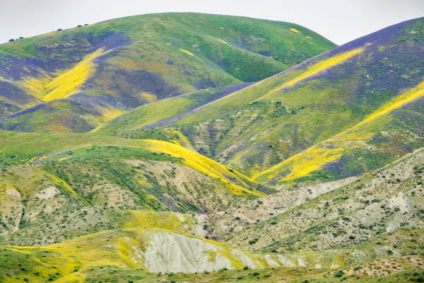 110a Carrizo Plain Hills are Greener 20170407 110aof365 - California Landscapes - Gregory Edwards Photography