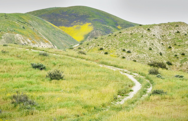 112a Back Road to  flowers Carrizo Plain 20170407 112aof365 - California Landscapes - Gregory Edwards Photography