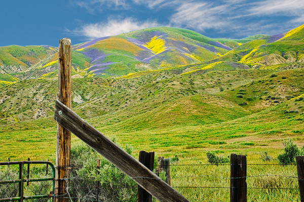 116a Fence and Gate at Carrico Plain on 20170407 NO saturation or vibrances added-v2 blue sky 116aof365 - California Landscapes - Gregory Edwards Photography