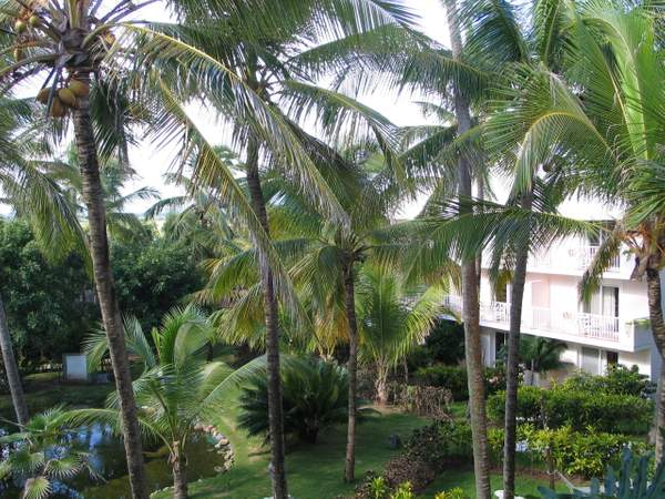 Garden View from Imperial Suite One