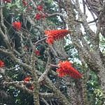 Hawaii 2012, Part 6