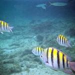 Iberostar Bavaro Punta Cana Snorkel & Excursions 2006