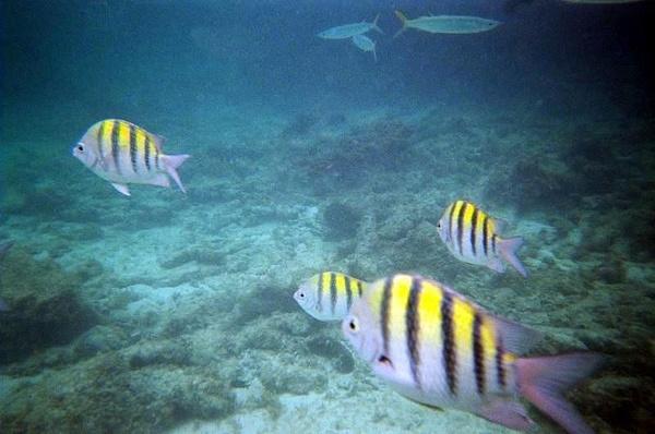 Iberostar Bavaro Punta Cana Snorkel & Excursions 2006 by DebBoKay
