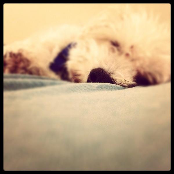 iPhone photo SP_2550754 by RebekahSylvia