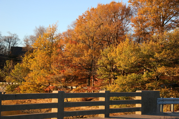Fall colors, Cohasset