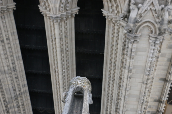 A gargoyle's eye view of  Notre Dame's north tower