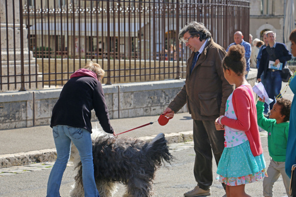 The Sheep dog creates a sensation in the cathedral square. Who doesn't love a shaggy hound?