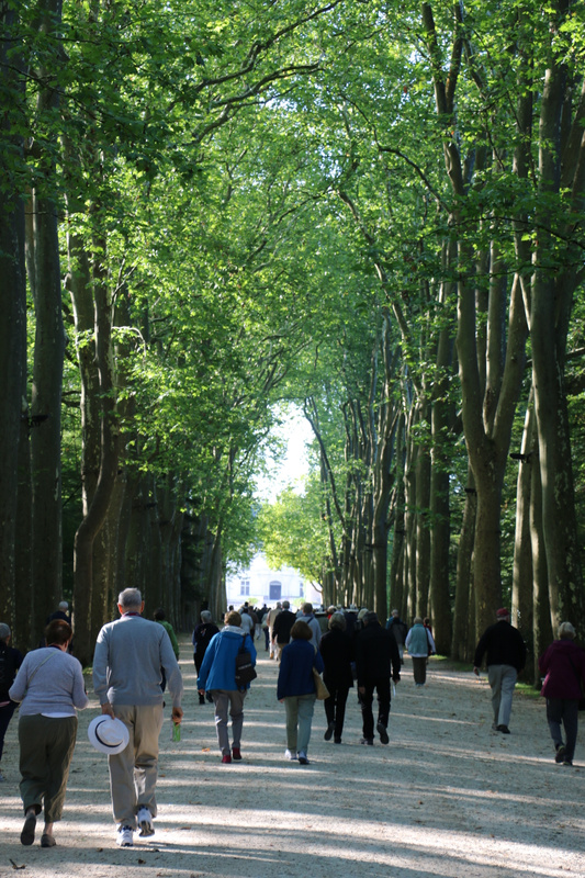 Approaching the château under a sylvan canopy