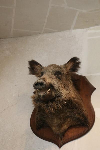 A Boar's Head surveys the pantry