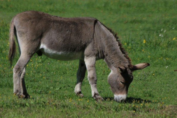 The chateau's 'Donkey Park' which includes several different  breeds of Donkeys