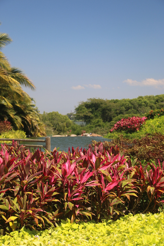 The lush vegetation at the Vidanta resort (Monday)