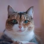 10 ноября котик