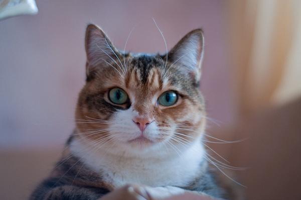 10 ноября котик by ElenaSavva