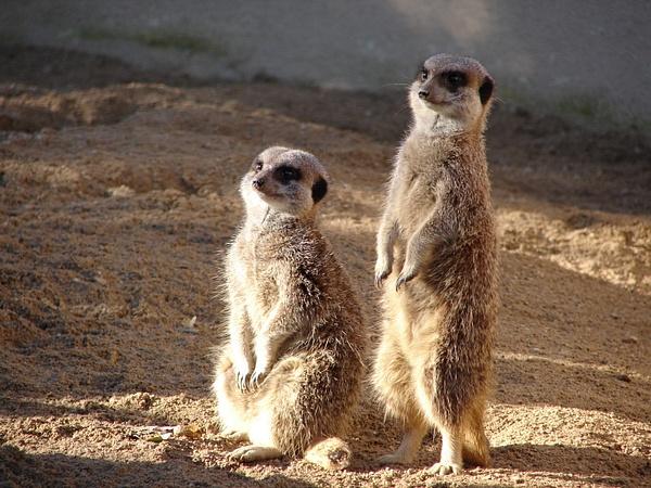 Cotsworld Wildlife Park by ChrisHandley