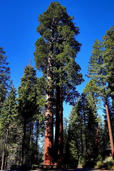 Sequoya park by sh7058h