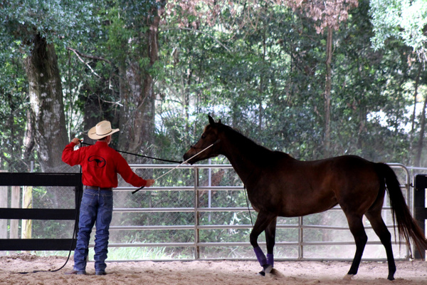 Horse Training by LaurieKelley