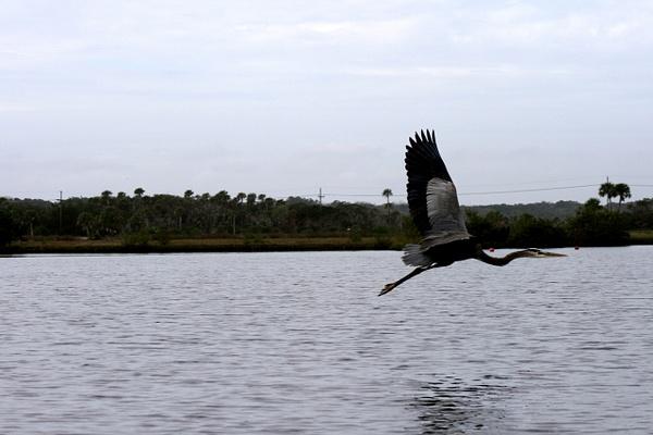 Birds of Highbridge Ormond Beach FL by LaurieKelley