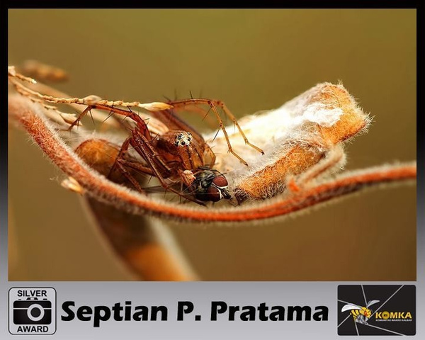 My award by SeptianPutrapratama