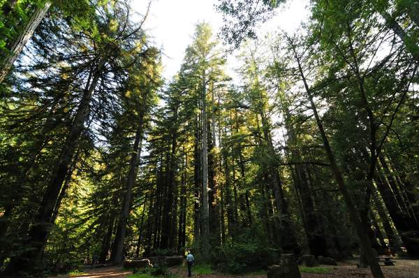 Camp_Taylor_Redwoods_DSC_5368_Full_DxO