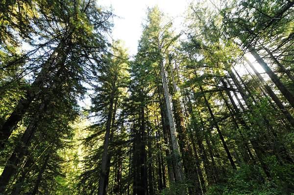 Camp_Taylor_Redwoods_DSC_5370_Full_DxO