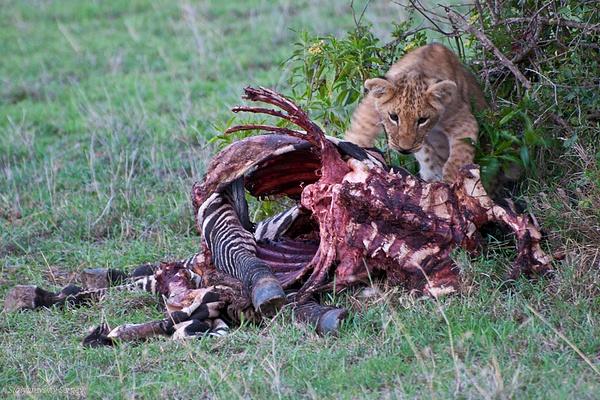 Kenya by SergeySt