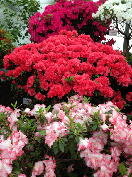 Botanic Garden by Clarissa