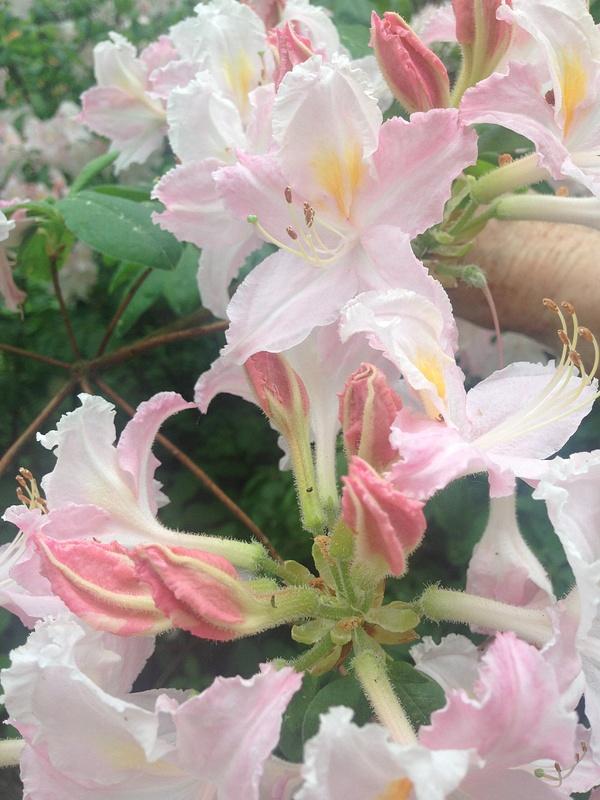 iPhone photo SP_8325152