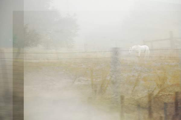 WHITE HORSE IN FOG...BUT DO WE STOP?