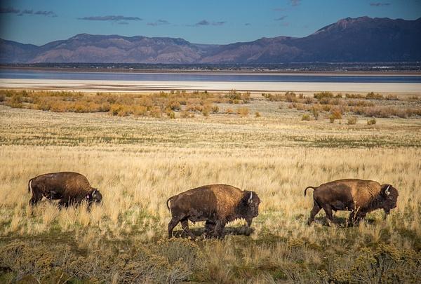 Antelope island by Vitaliy Teslya
