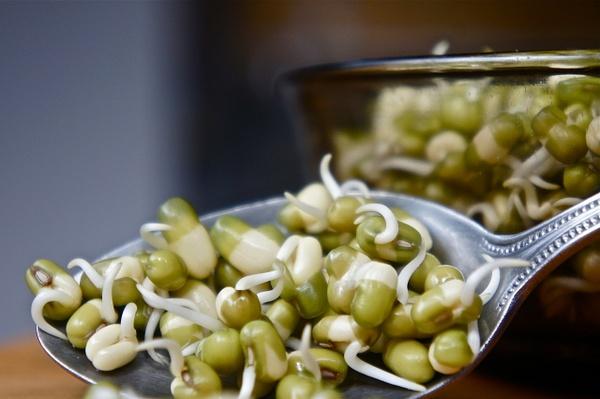 Mung Beans! by JoeODell