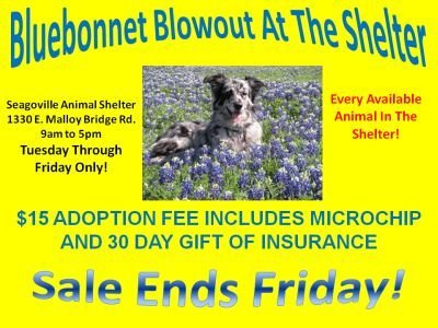 Bluebonnet_Blowout