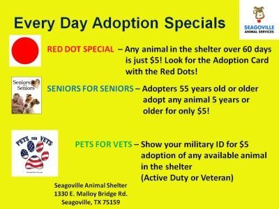 Every_Day_Adoption_Specials