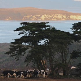 Landscapes and Seascapes at Point Reyes