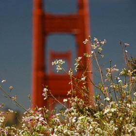 Golden Gate National Parks Family Camping Trip - R