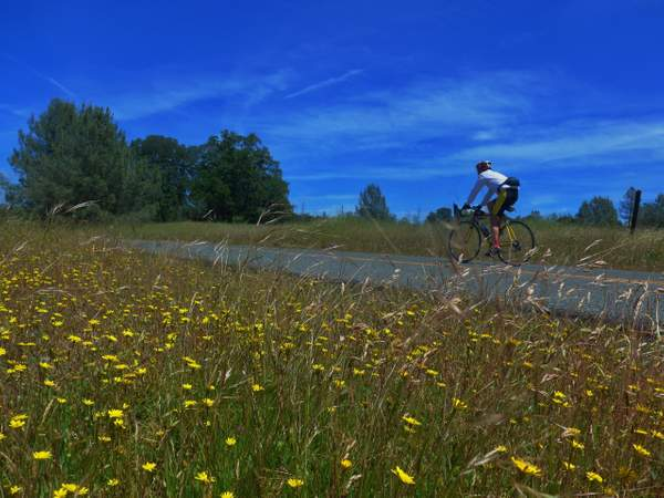 We Rode Past Plenty of Wildflowers along the Higher Reaches of the Ride