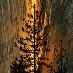 Yosemite's Natural Fire Fall