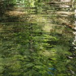 Cynthia Wolf Green on Water Series