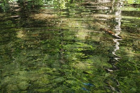 Cynthia Wolf Green on Water Series by CynthiaWolf