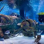 2015_04_Эхо_Подводный мир Анталии